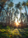 Deep autumn forest with pine trees and moss fields. Tilt shift effect applied - 176236495