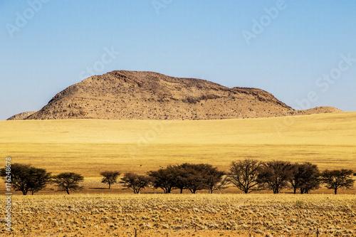 Fotobehang Meloen Deserto e alberi