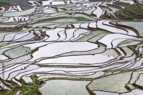 Deurstickers Rijstvelden Terraced rice fields in Yuanyang county, Yunnan, China