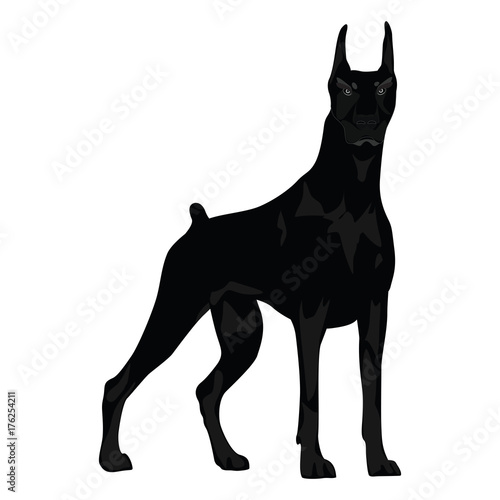 Dog - evil, aggressive, thoroughbred, proud - sketch - isolated on white background - art creative illustration