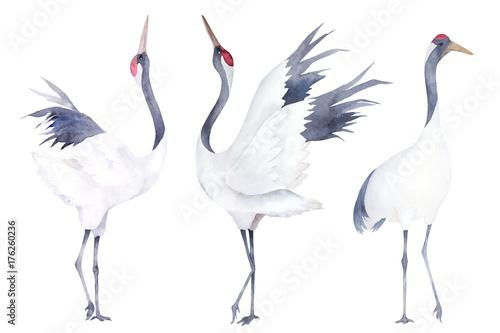 Watercolor set of cranes. Hand drawn illustration - 176260236
