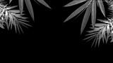 grey bamboo leaves on black background - backdrop