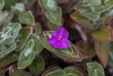Pianta grassa - 176268645