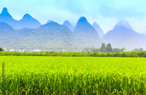 Poster Lime groen Guangxi rice farmland