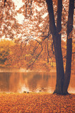 Autumn landscape with small pond in the park.Moscow region,Russia  - 176284495