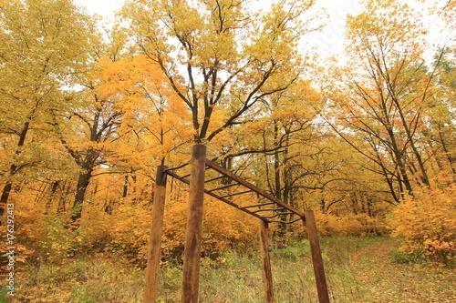 Fotobehang Oranje old sports equipment in autumn forest