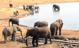 Many elephants visiting a waterhole to quench their thirst  in Hwange, Zimbabwe - 176292827