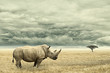Rhino standing in dry African savana with heavy dramatic clouds above