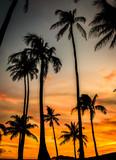 Palm Trees - 176301664