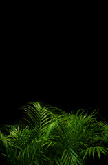 palm leaves on dark background