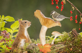 squirrel and a great tit on mushroom - 176302241