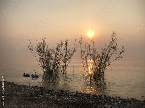 Sonnenuntergang am Gardasee mit Enten im Schilf am Ufer