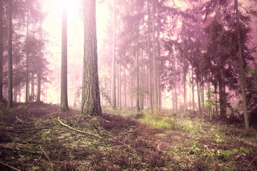 Scary pink red saturated foggy forest tree landscape. Color filter effect used. © robsonphoto