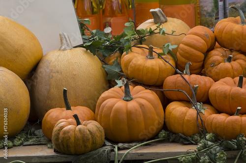 pile of small cute pumpkins at pumpkin patch - 176304038
