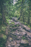 path in the forest in the Carpathian mountains
