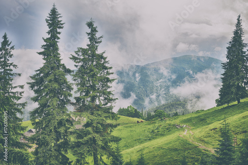 Foto op Aluminium Pistache beautiful forest landscape in the mountains