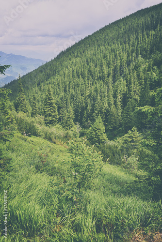 Fotobehang Olijf beautiful forest landscape in the mountains