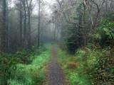 Foggy Autumn forest morning,Northern Ireland - 176314621