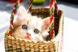 cute blue eyed kitten in a basket