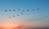 Pelicans over bright sunset - 176321682