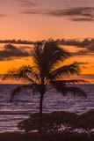 Sunrise Palm Tree - 176331621