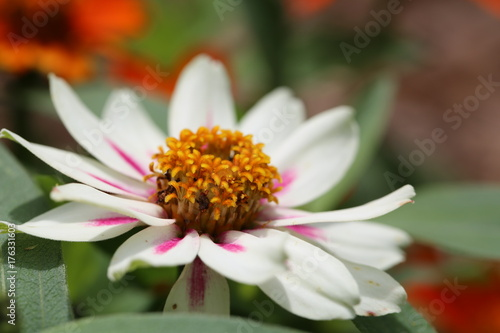 Poster Macro Closeup Flower Plant Life
