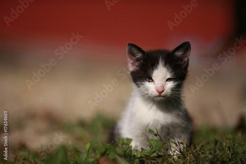 Fotobehang Kat Katzenkind in der Wiese