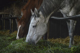Fototapeta Horses - stajnia  © Dorota