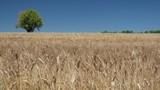 Campi coltivati in Provenza - 176352695