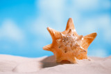 tropical seashell sea shell with ocean , beach and seascape - 176358444