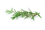 Rosemary isolated on white background - 176364451