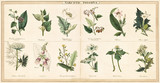 Vintage style illustration of a set of plants used to create narcotic poisons - 176367031