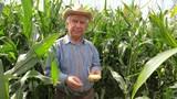 Portrait Of An Elderly Farmer In A Cowboy Hat In A Corn Field Holding Corn Cob - 176378277