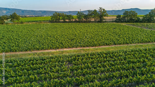 Staande foto Wijngaard Aerial top view of vineyards landscape from above background, South France