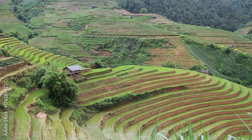Fotobehang Pistache Mu cang chai