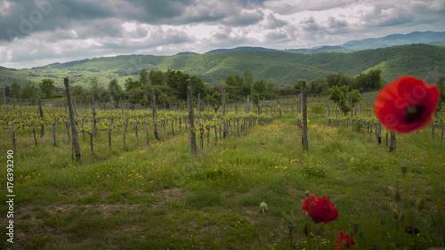 Deurstickers Klaprozen papaveri e vitigno