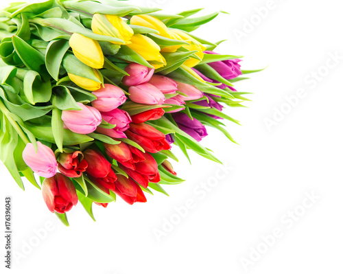 Tulip flowers Bouquet spring blooms white background