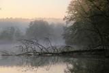 Nebel am Fluss, mystische Lichtstimmung - 176406261