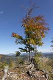 autumn in styrian forest, austria - 176408014