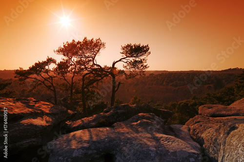 Keuken foto achterwand Bruin Rochers du golfe de Larchant dans le massif forestier de Fontainebleau