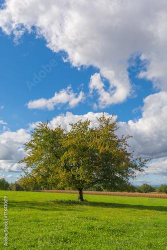 Fotobehang Lente Baum im grünen