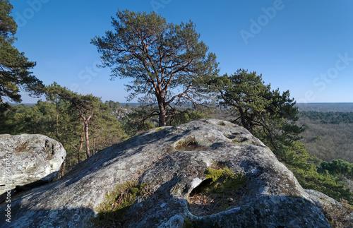 In de dag Zwart Golfe de Larchant dans la massif de Fontainebleau