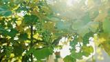 Green vineyard on a bright sunny sky background 4K - 176432899