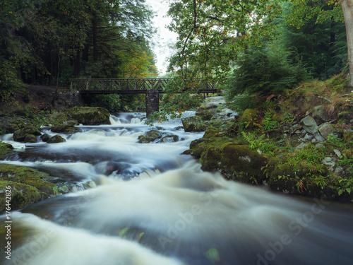 Keuken foto achterwand Olijf Mountain stream in green forest at Autumn time
