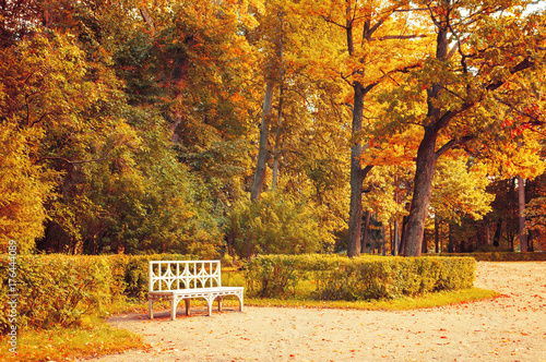 Poster Honing Autumn landscape. Wooden bench in the autumn park under yellowed autumn trees