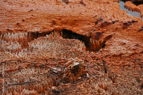 Tuinposter Stenen Hydrothermal in Yellowstone