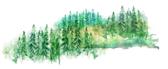 Watercolor group of trees - fir, pine, cedar, fir-tree. green forest, countryside landscape. Drawing on white isolated background. © helgafo
