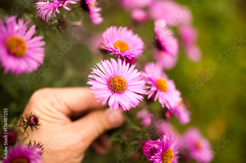 beautiful purple flower in a hand outdoors