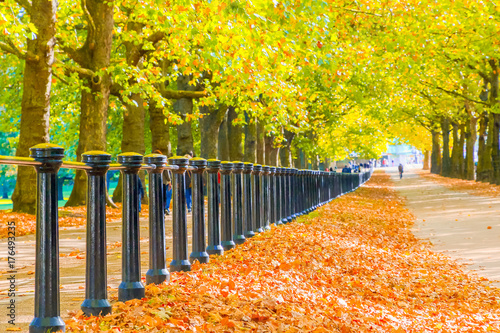 Aluminium Geel Autumn scene, constitution hill road lined with trees in Green Park, London