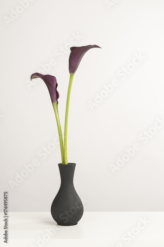 Two black calla lily flowers in a black vase on a white shelf on a white backgro Poster